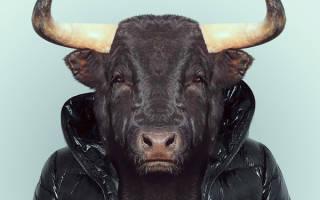 Год быка совместимость с другими знаками. Год Быка гороскоп – любовь совместимость