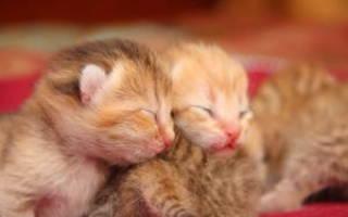 Новорожденные рыжа белые котята. К чему снятся новорожденные котята