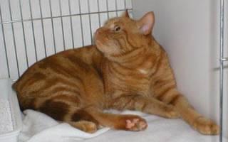Толкование снов котенок рыжий. К чему снится рыжий кот? Значение сна