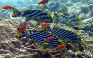 К чему снится большая рыба во сне. Малый Велесов сонник Почему во сне снится Рыба