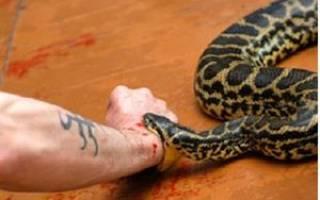 Во сне укусила ядовитая змея в руку. Укусила змея во сне за руку сонник