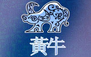 Любовный гороскоп для быка на год. Год петуха для быка