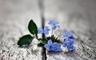 Беседа иисуса христа о прощении обид. Святые отцы о прощении обид и благодушии
