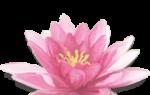 Кто такая богиня Кали? Боги индийской мифологии.