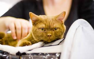 Сон коты значение. К чему видеть во сне кота? К чему снятся коты