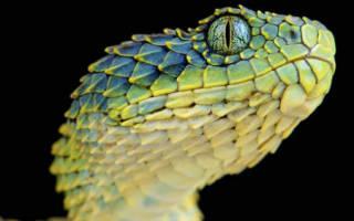 Сонник змея без головы к чему снится. К чему снится змея на голове