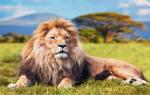 Сон про льва значение. Сонник: Лев