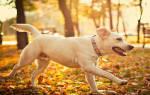 Сонник онлайн белая собака. К чему снится большая белая собака