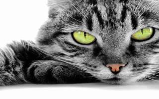 Приснилось во сне убивать кошек. Эзотерический сонник Если снится Кошка