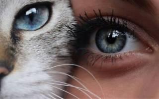 Животные подходящие по знаку зодиака. Кто это у нас такой милый котик?! Какой ты домашний питомец по знаку зодиака? Весы — панда