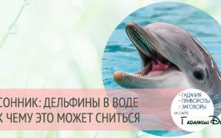 Если в приснился океан и много дельфинов. Дельфин — счастливый символ во сне