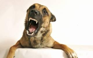 Если снится что укусила собака за ногу. К чему снится Собака укусила за ногу во сне по соннику? Нападение своры собак