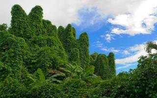 Толкование сна джунгли в сонниках. Что предвещает сновидение: Джунгли