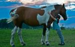Сонник: к чему снится лошадь. Масть имеет значение