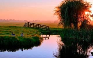 Грязный пруд во сне. Приснился пруд — что может сулить такой сон? Что вы делали в водоеме