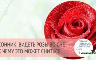 Сон красные розы много. Толкование снов: к чему снятся розы? К чему снятся розовые, черные, желтые розы
