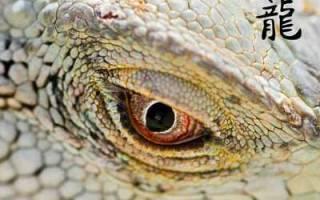 Виды драконов в гороскопе и характера. Дракон