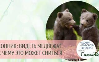 К чему снятся медвежата: толкование по различным сонникам для мужчин и женщин. К чему снится медвежонок: стоит умиляться или бояться