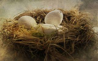 К чему снится гнездо: пустое, разорённое, с яйцами, с птенцами? Основные толкования: к чему снится гнездо. Дворянский сонник Н.Гришиной