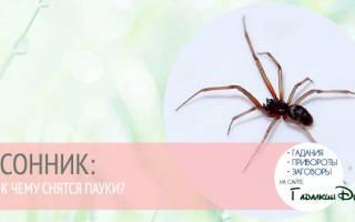 К чему снятся большие красные пауки. К чему снится черно красный паук
