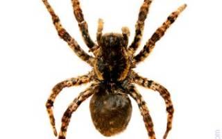 Сон по мне ползает паук. К чему снится много пауков ползающих по мне