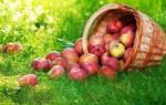 Когда начинается яблочный спас в году. Приметы, обряды и народные обычаи на яблочный Спас