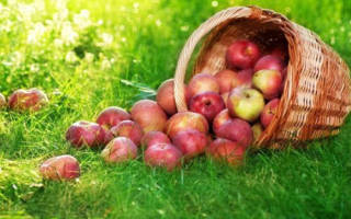 Когда медовый и яблочный спас. Традиции и обычаи яблочного спаса
